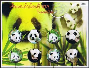 Thaipanda1